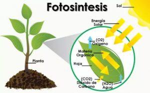 pengertian fotosintesis