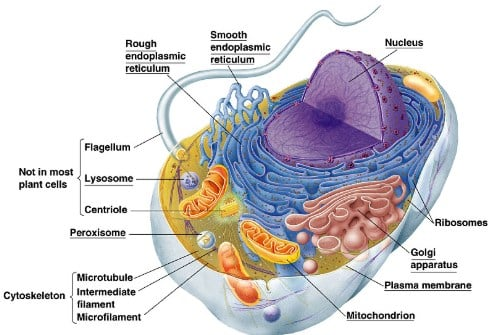 pengertian sel