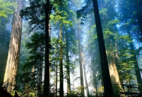 √Ciri Hujan Tropis : Pengertian, Fungsi, Persebaran dan Hujan Tropis Terbesari Didunia
