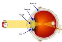 Cara Kerja Mata