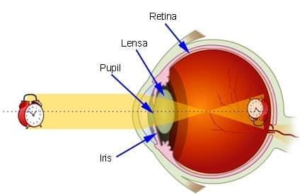 √ Cara Kerja Mata Kita : Pengertian, Organ dan Kelainan