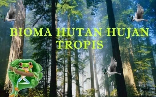 √ Bioma Hutan Hujan Tropis : Pengertian, Jenis dan Ciri