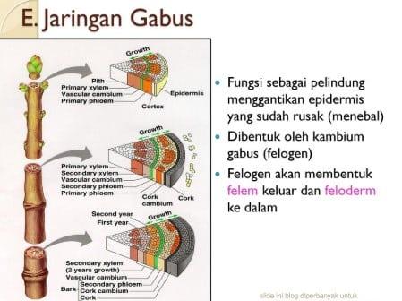 Jaringan-Gabus