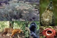 Pelestarian Flora dan Fauna