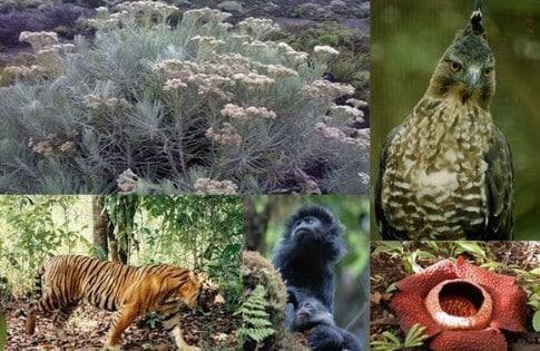 √ Pelestarian Flora dan Fauna: Cara Melestarikan, Faktor, Manfaat