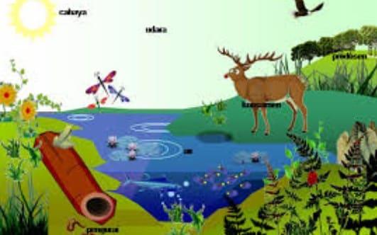 √ Pengertian Ekosistem : Macam Beserta Contohnya