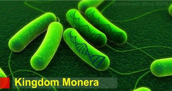 √ Ciri Kingdom Monera : Klasifikasi Beserta Perannya
