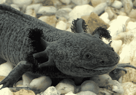Ciri Amfibi