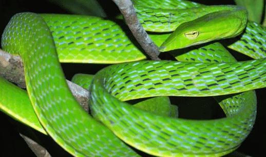 pengertian reptil
