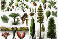 √Spermatophyta: Pengertian, Ciri, Jenis, Reproduksi, Manfaat