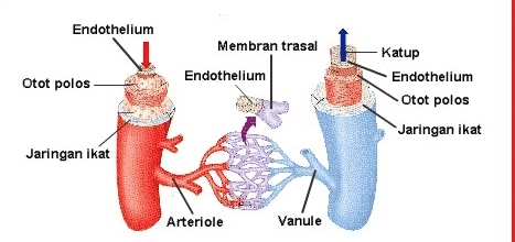pengertian arteri