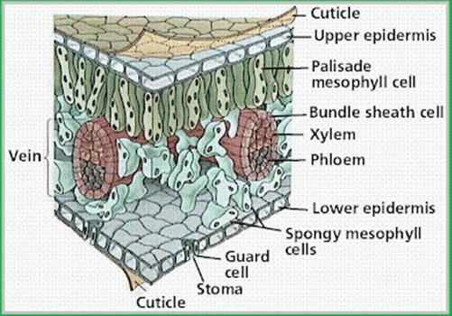 struktur mofgologi