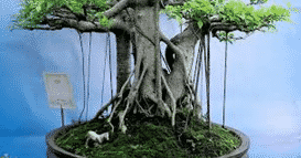 akar gantung