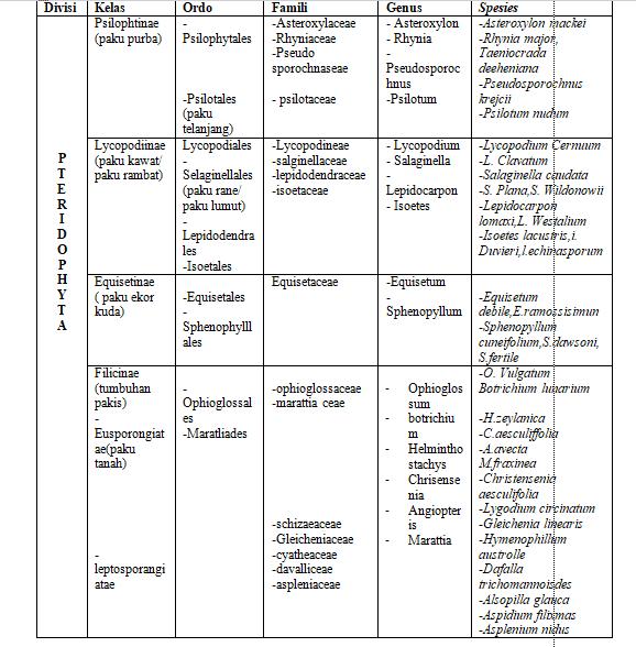 klasifikasi tanaman paku