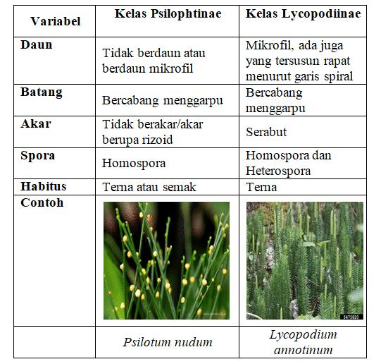perbedaan kelas