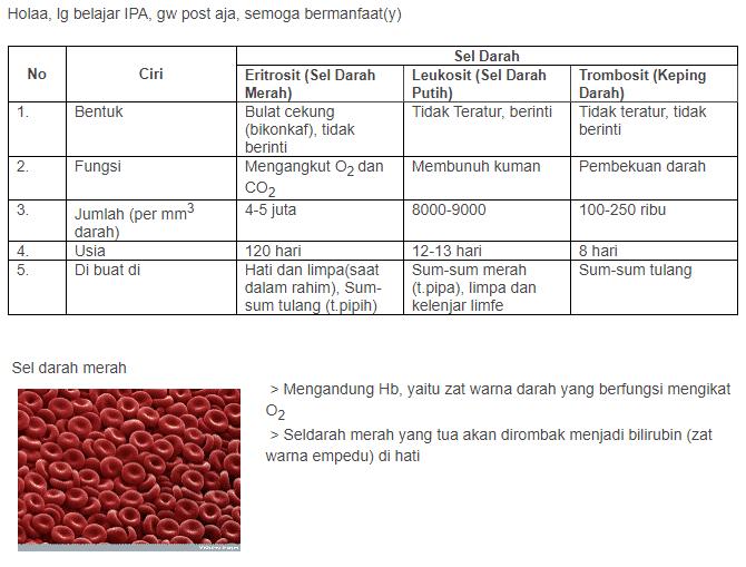 ciri eritrosit