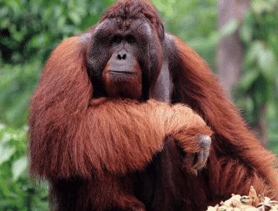 Fauna Pengertian Asal Usul Persebaran Contoh Gambar