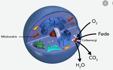 gambar sitoplasma