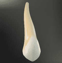 gigi taring