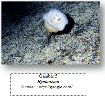 klasifikasi porifera