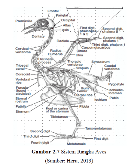 sistem rangka aves