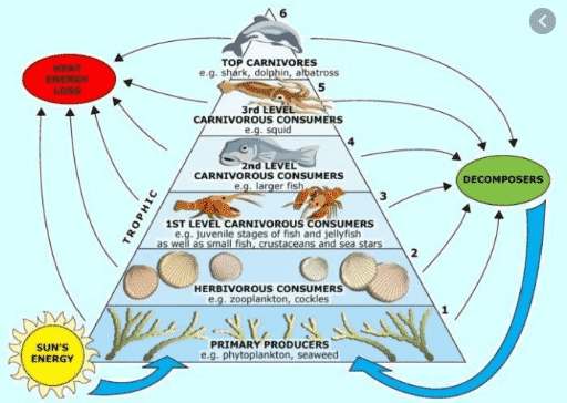 bagan rantai makanan di laut