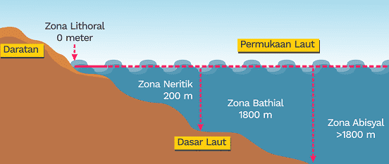 contoh zona litoral