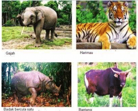 fauna bagian tengah