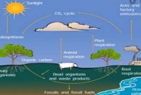 daur oksigen