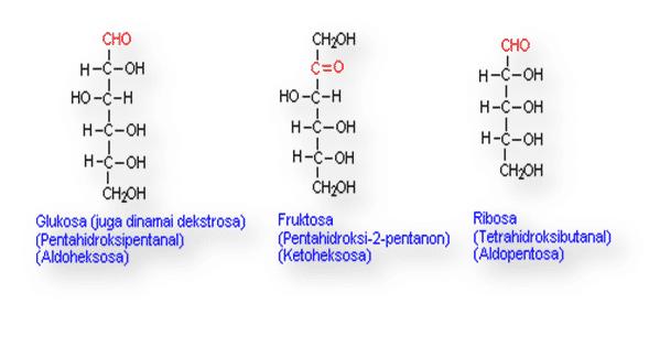 Fungsi-Karbohidrat
