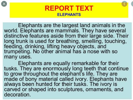 7 Contoh Report Text Pendek Bahasa Inggris Beserta Artinya English Admin