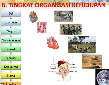 tingkat organisasi kehidupan