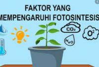 faktor yang mempengaruhi fotosintesis
