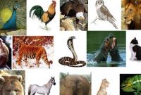 pengertian hewan