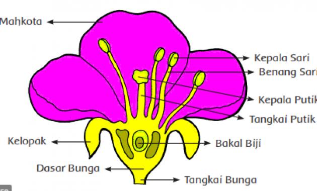 tumbuhan generatif